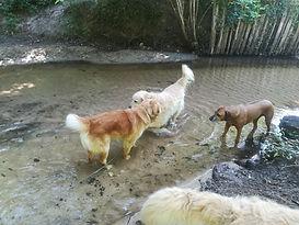dans le ruisseau