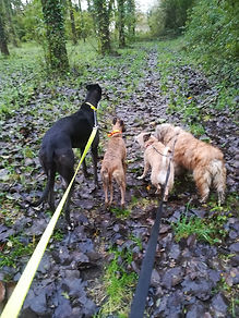 Pippa, Jodie, Lili, Didjy