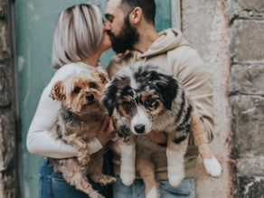 10 Tips For Including Your Dog In Your Engagement Photos  // Baltimore Wedding Photographer