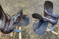 before and after of dark brown horse rid
