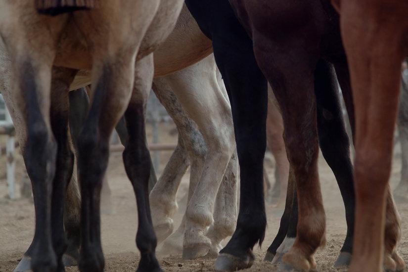 variety of horse legs