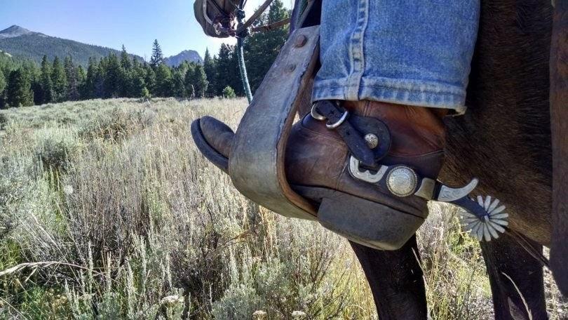 horse being ridden in a field.jpg