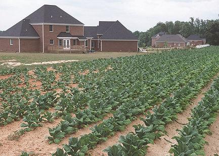 North_Carolina backyard farm_5125.jpg