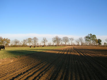 Farmland_somewhere_in_North_Carolina.jpg