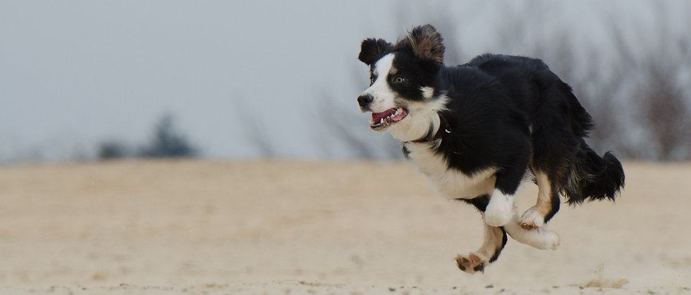 running-dog-747751_1920_edited.jpg