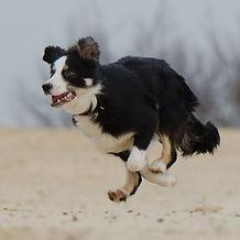 running-dog-747751_1920_edited.jpg