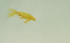 Fish rotoscope