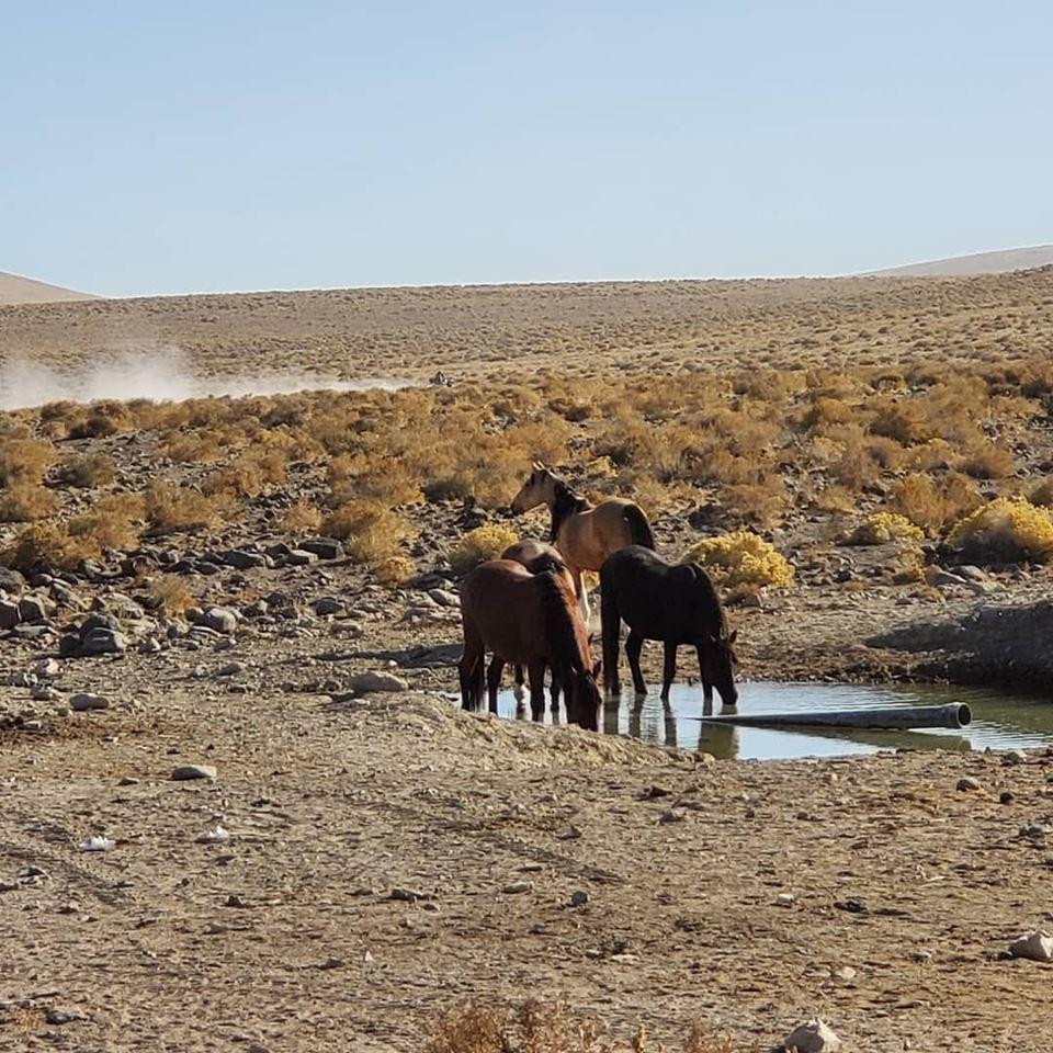 Wild Horses oooo aaahhhh