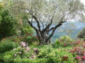 Valsaintes Jardin #2.JPG