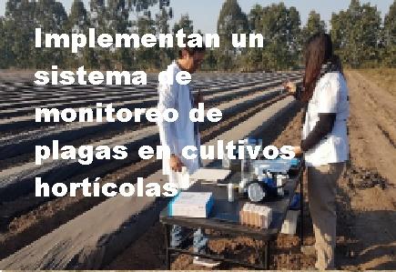 cultivos horticolas