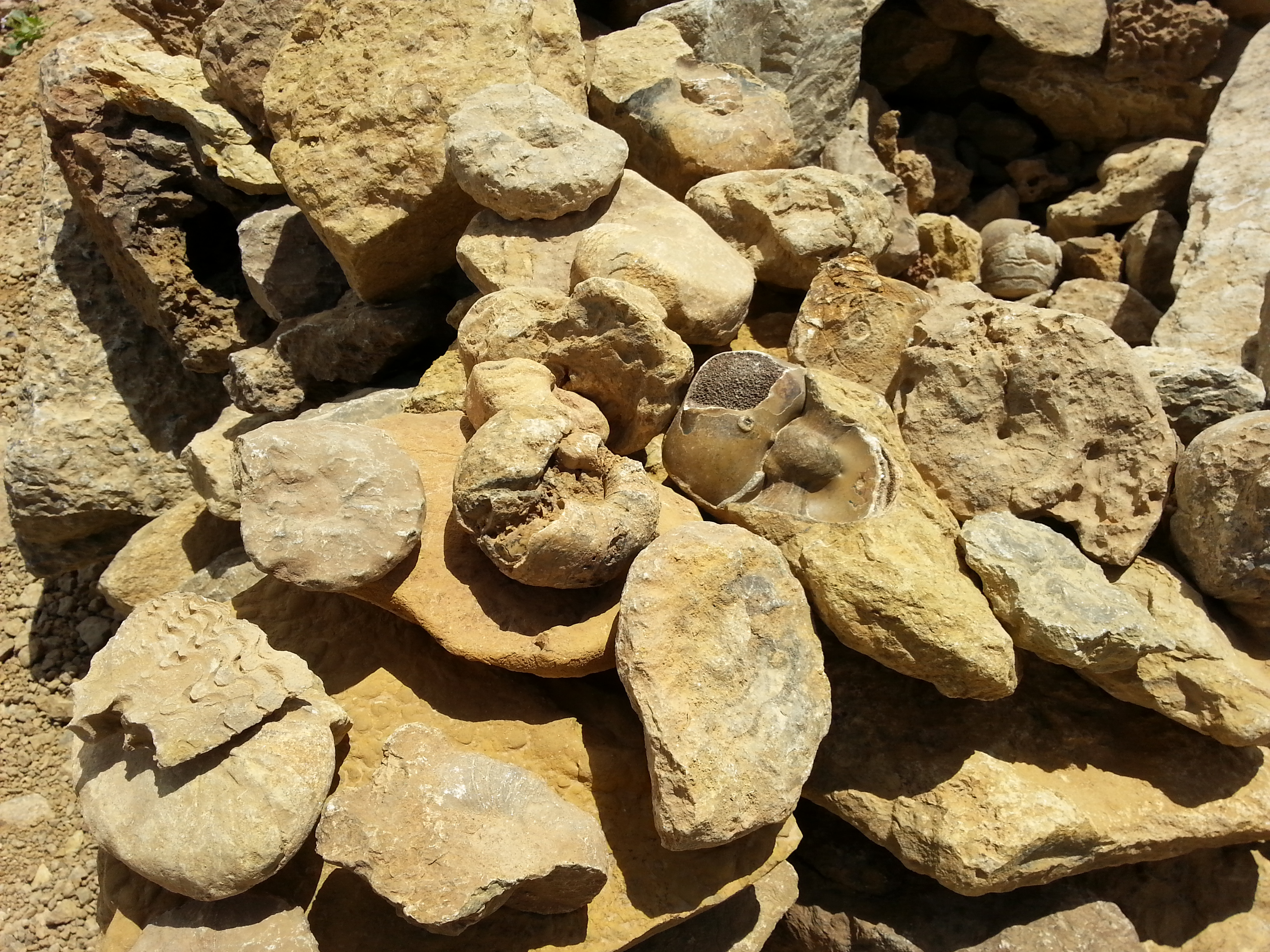 Fossils on a Ramon Crater Jeep tour