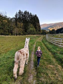 Une balade avec les Lamas