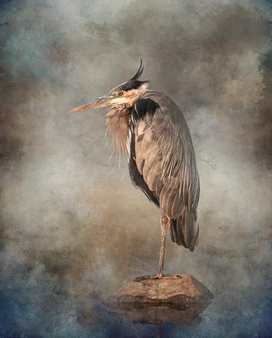 Blue Heron - Wisdom
