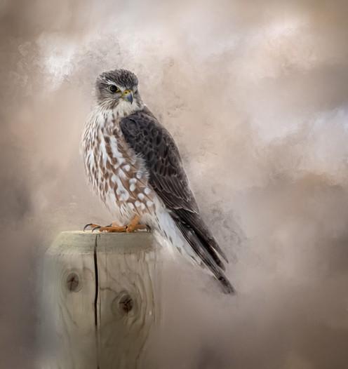 Merlin - Contemplate