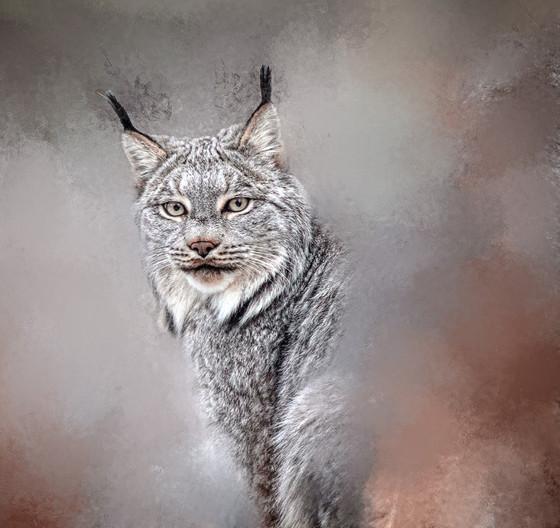 Lynx - Observation - Spirit Series-1.jpg