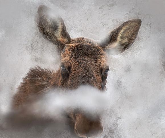 Moose - Self Esteem