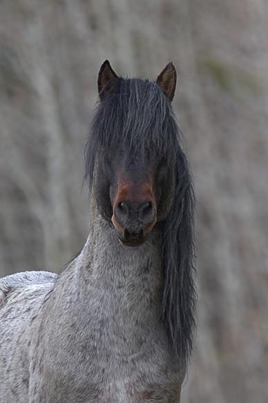 Stunning Stallion