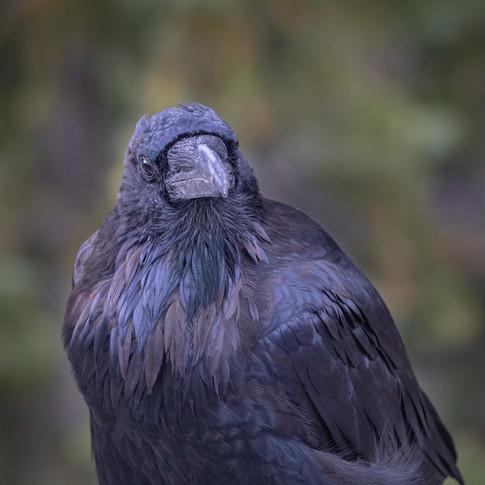 Raven - Eye on you.jpg