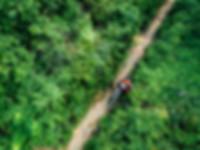 cyclingrainforest.jpg
