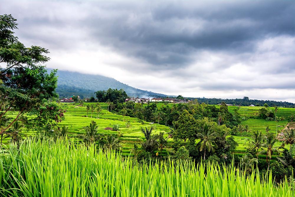 Die Reisterrassen von Jatiluwih auf Bali zählen zum UNESCO-Weltkulturerbe