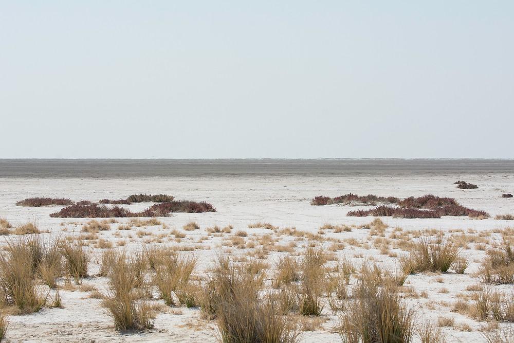 Der Blick auf die Salzpfanne im Etosha Nationalpark
