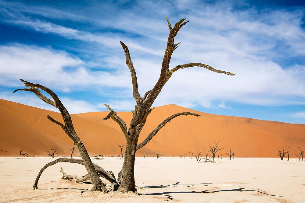 Kameldornbaum im berühmten Dead Vlei Namibia