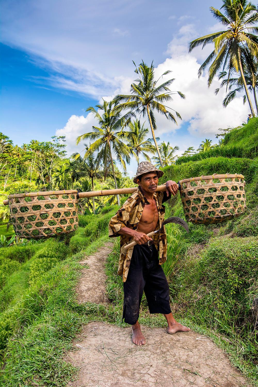 Tegalalang Reisterrassen Bali