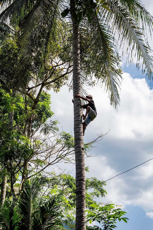 Das Dorf Candirejo Palmen klettern