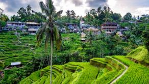 Indonesienrundreise, Java und Bali letzter Teil!