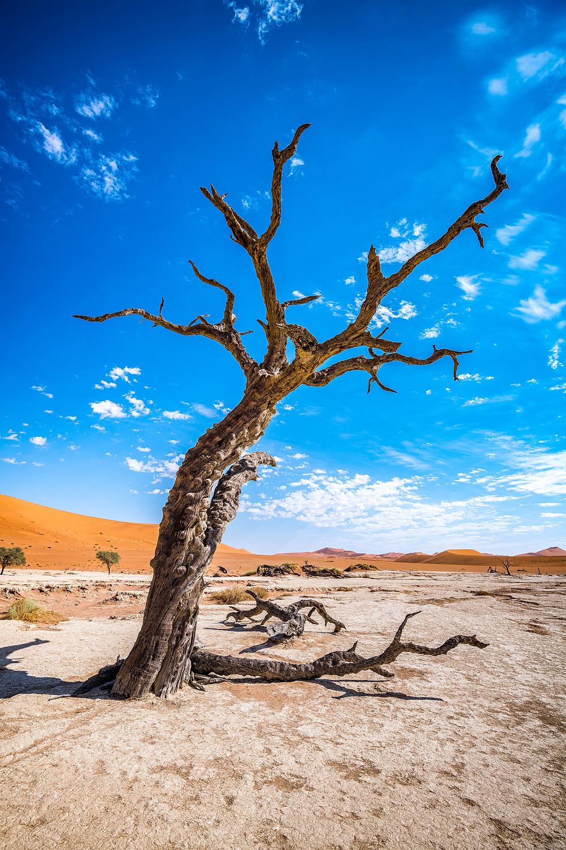 Dead Vlei in der Namib