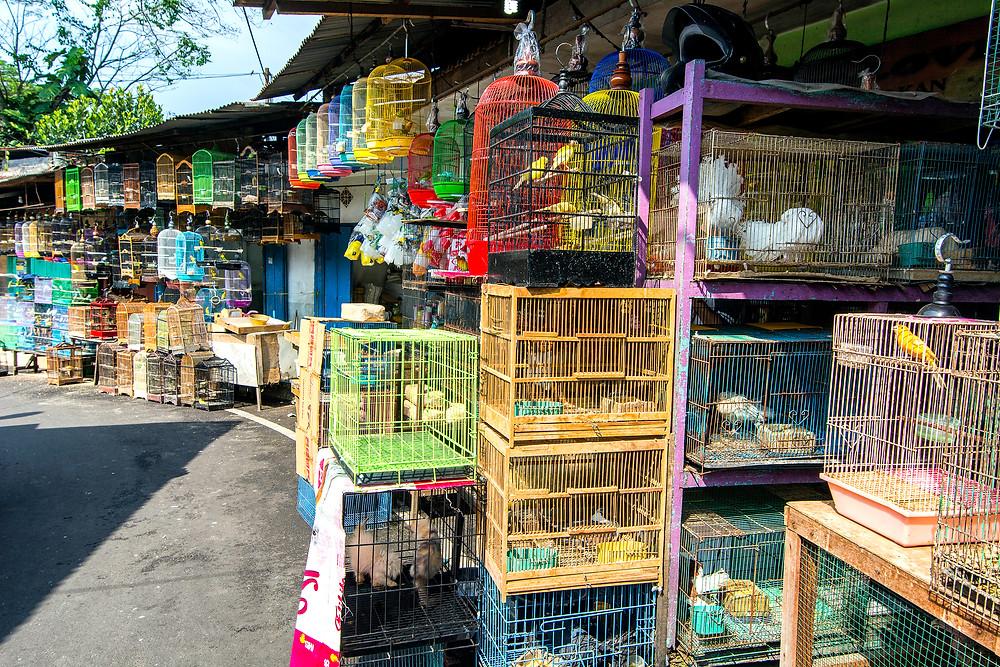 Vogelmarkt in Malang