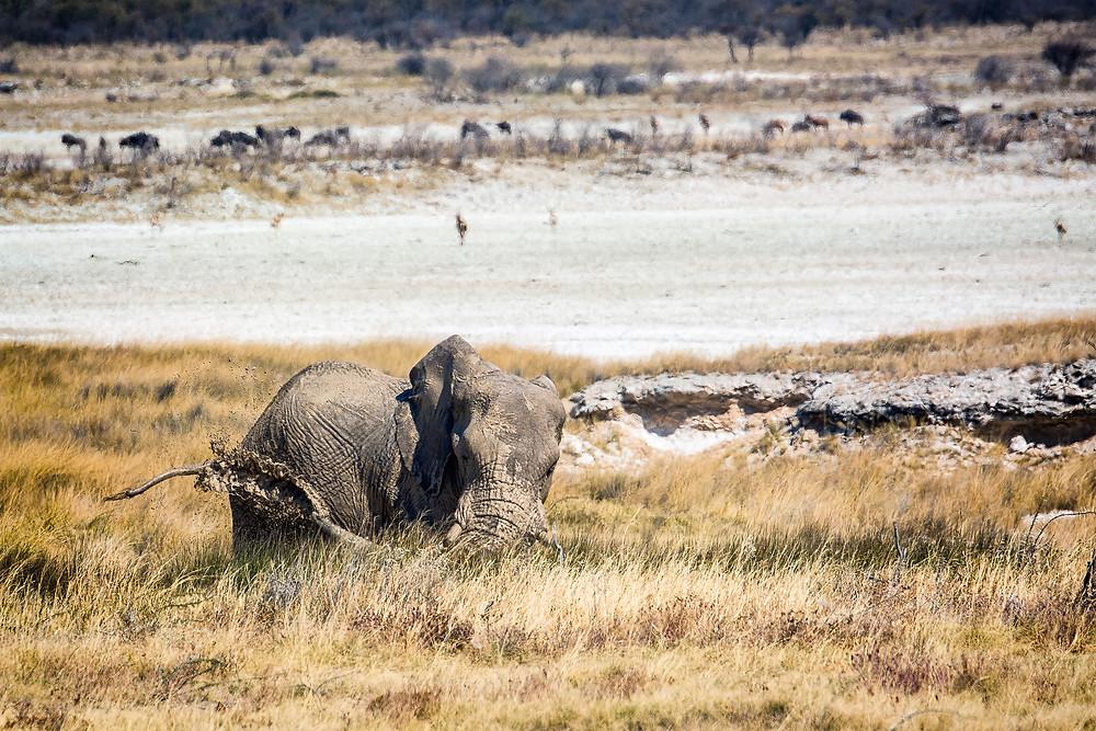 Springbokfontein ist beliebt bei Elefanten