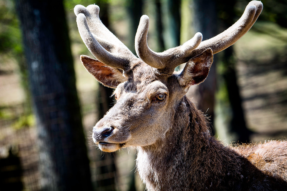 Safari im Wild- und Erlebnispark Daun