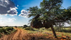 Zurück in Namibia