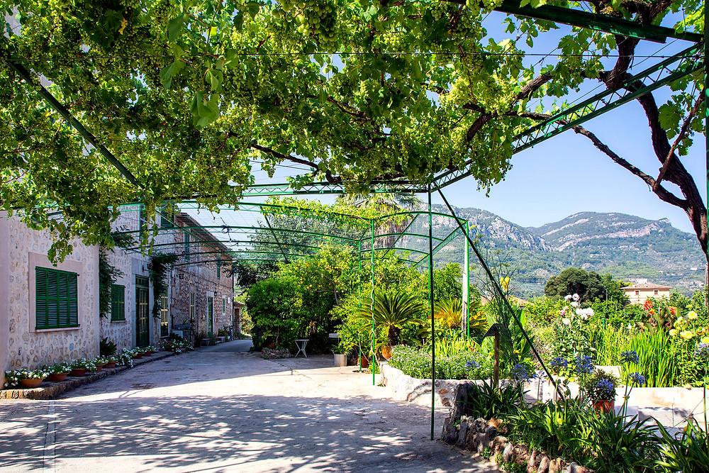 Eco Vinyassa in Sóller auf Mallorca