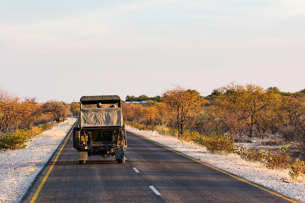 Eines von vielen Safari-Gefährten in Namibias Nationalparks