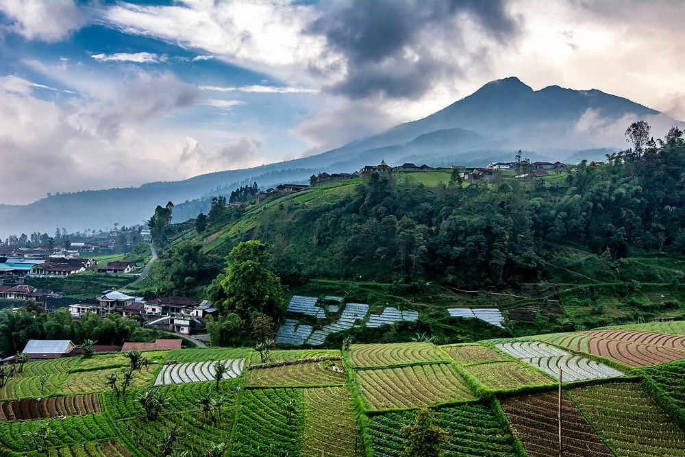 Tawangmangu Vulkan Felder