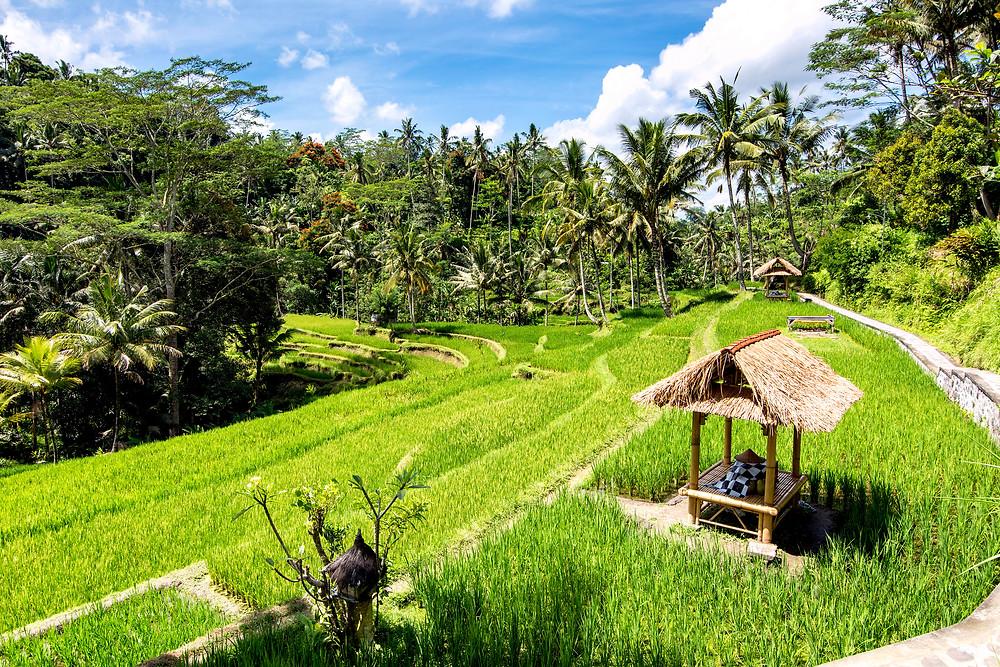 Die Reisterrassen bei den Königsgräbern von Gunung Kawi