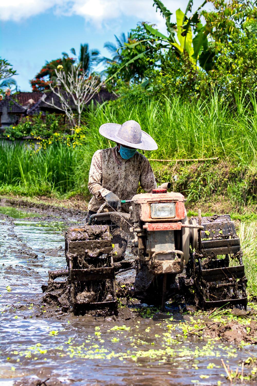 Maschine im Reisfeld auf Bali