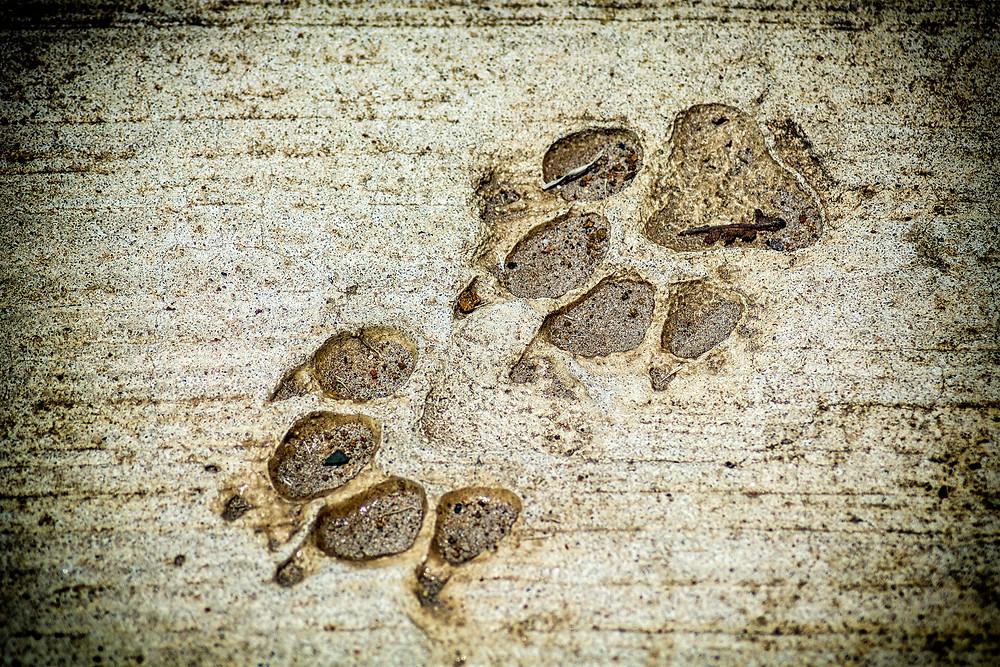 Fußspuren im Beton