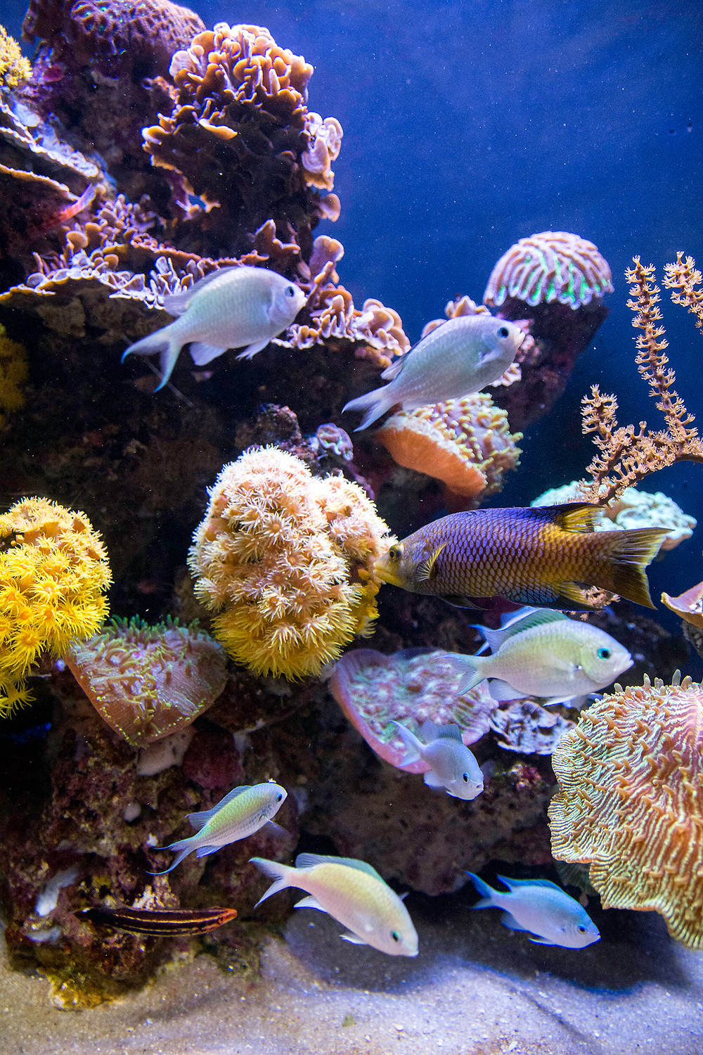 Aquarium in Palma de Mallorca