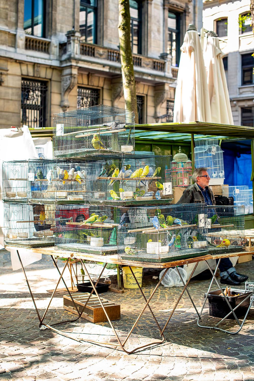 Vogelmarkt Antwerpen