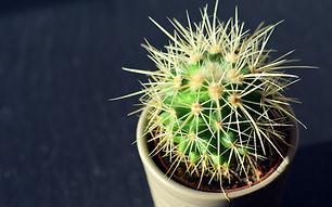 cactus-close-up-decoration-371546.jpg