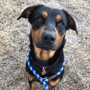 Adopted: Ares
