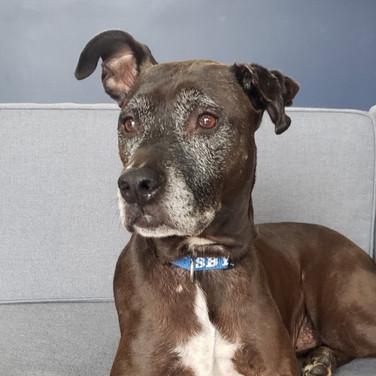 Adopted: Duke