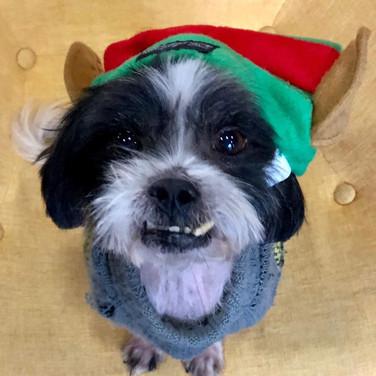 Adopted: Elf