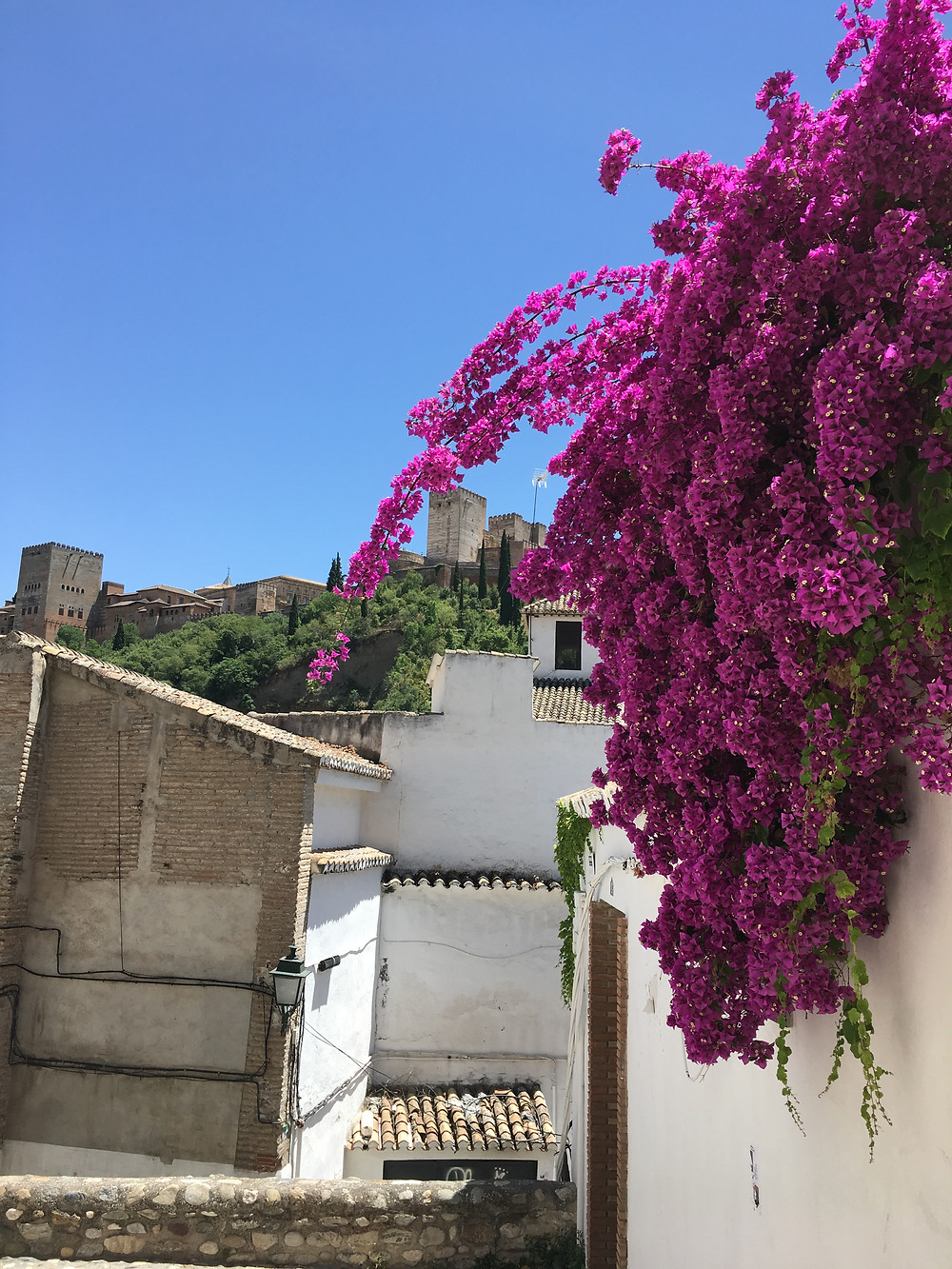 Gorgeous pink flowers in Granada, Spain