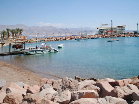 The Story Behind Eilat - A Punchy Palm Tree Art Piece