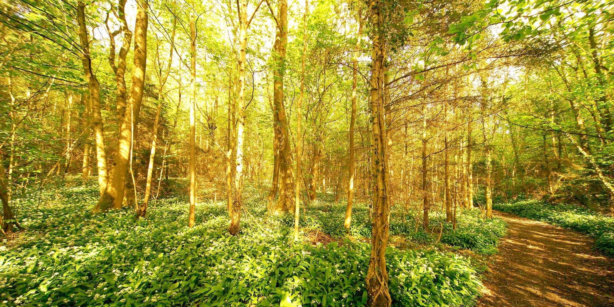 72-trevor-woods-21
