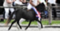 2018-06-24 (3)camille kampioen.png
